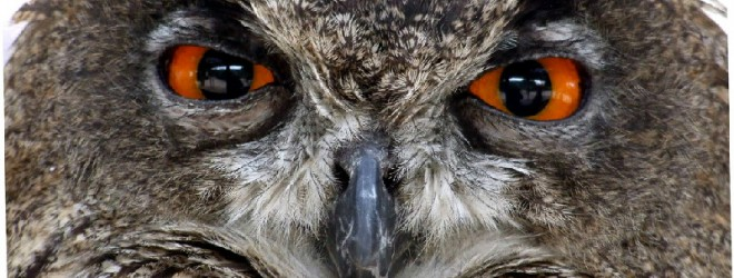 Castrating an Owl and insulting strangers&#8230;.. ~ Northernmum