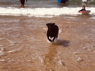 Tales from the beach – Surviving